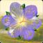Live Wallpaper Flower Clock