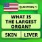 Jogo gratuito de perguntas e respostas: QuizzLand